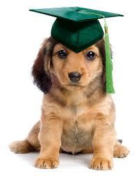 dog graduating