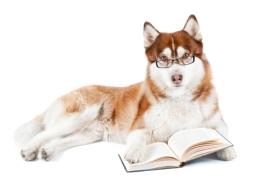 dog learning