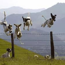 dogs jumping